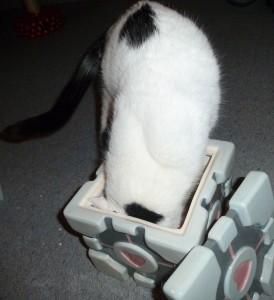 Katze in der Keksdose