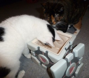 Katzen in der Keksdose